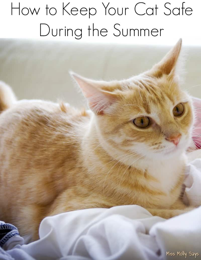 How to Keep Your Cat Safe During the Summer