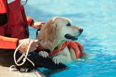 How to Teach Your Dog to Swim