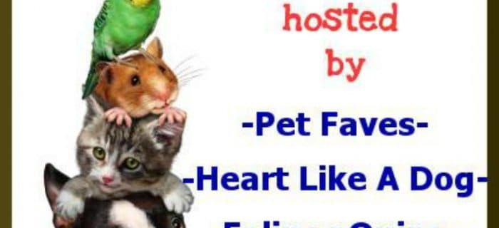 Pet Blogger Showcase: August 20