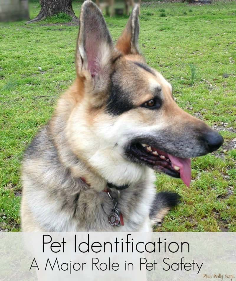 Pet Identification - A Major Role in Pet Safety banner
