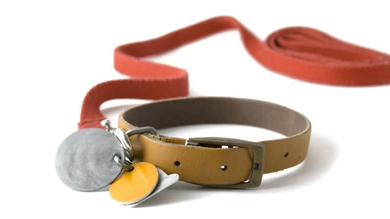 dog collar with tags