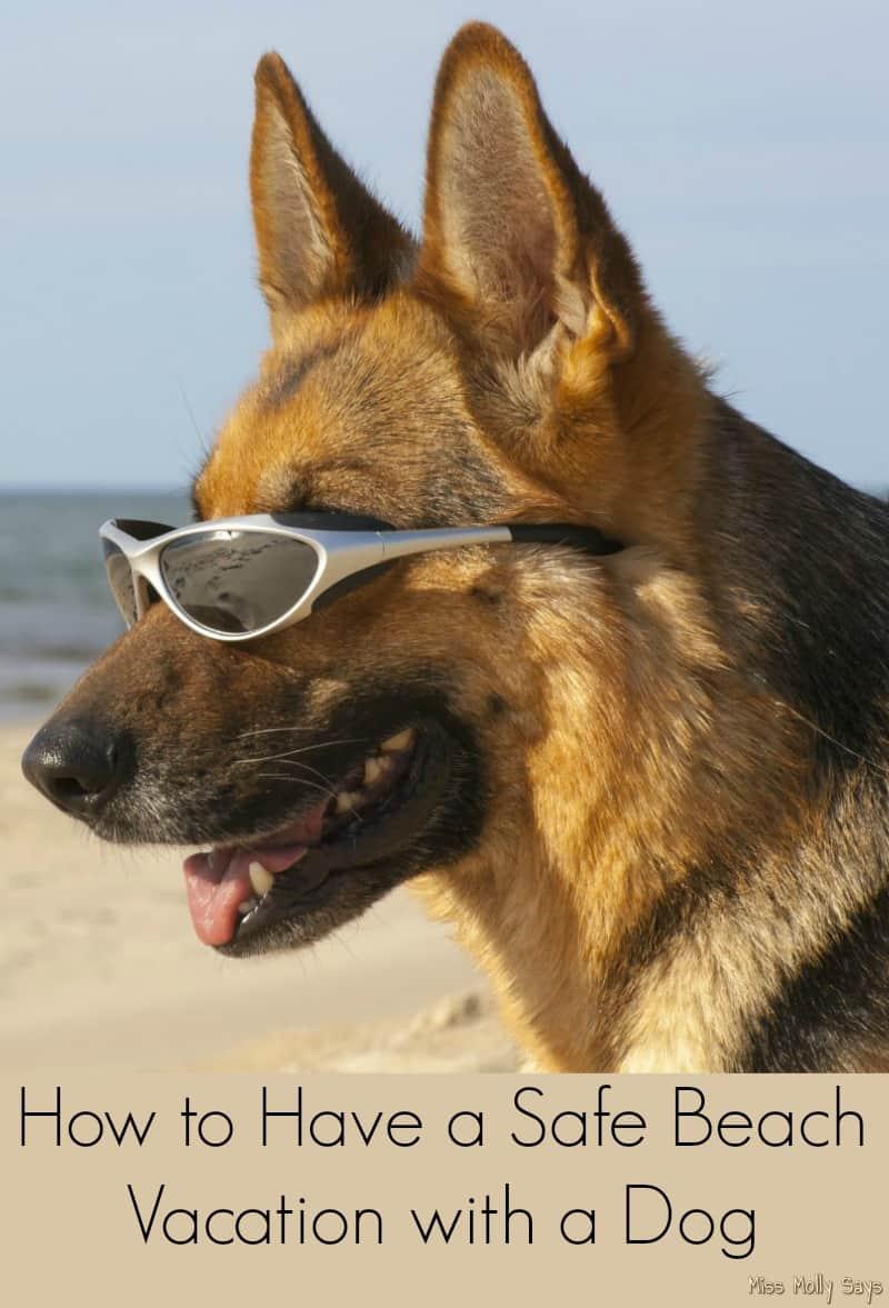 german shepherd on beach banner