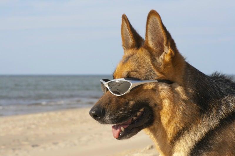 How to Have a Safe Beach Vacation with a Dog