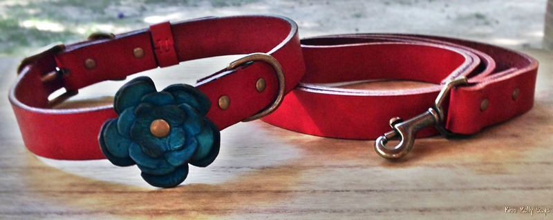 iQ Studio Dog Collar and Leash