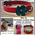 #Win an iQ Studio Leather Dog Collar of choice! #DogDaysGiveaways - ends 8/7 US Only