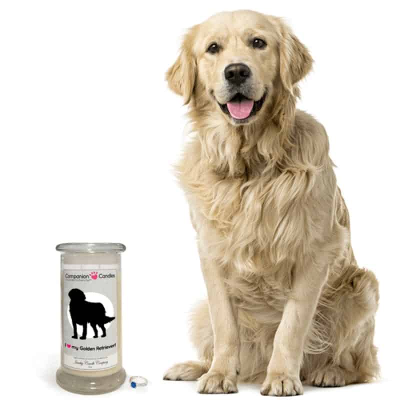 GoldenRetriever-jewelrycandle