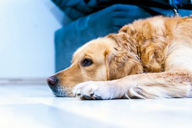 Making Your Office More Pet-Friendly