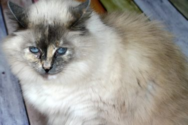 The Best Nutritious Cat Food for a Girl's Best Friend #MyGreatCat