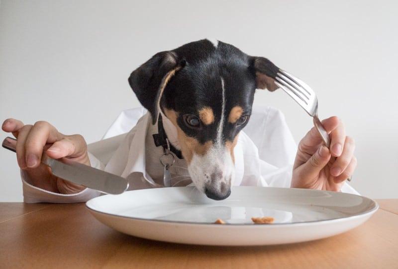 dog-eating-at-table