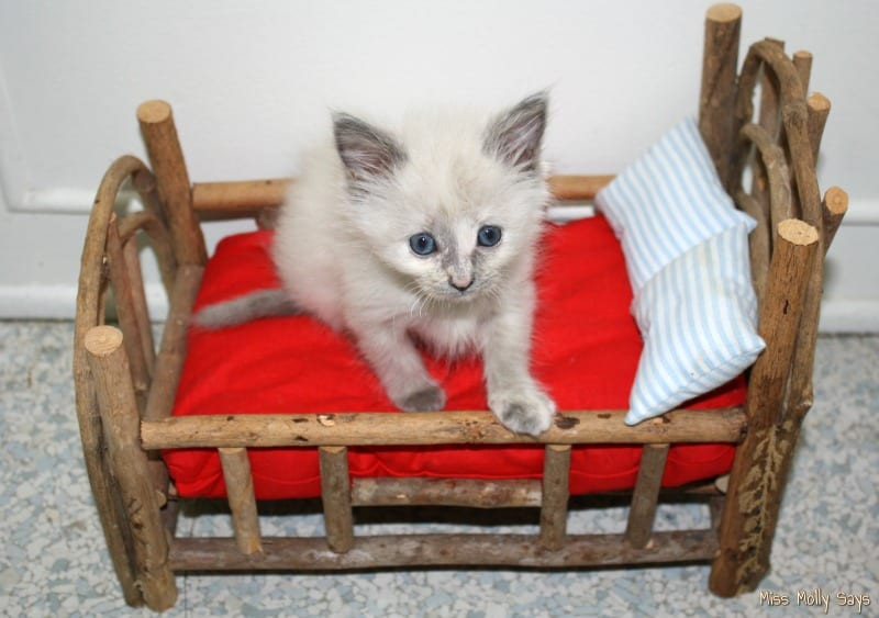kitten on a log bed