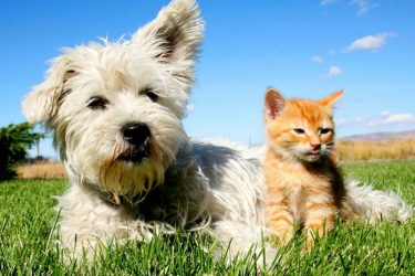 Helpful Pet Health Tips for Your Four-Legged Friend