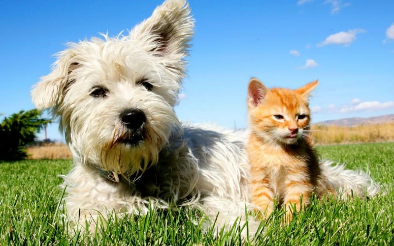 hHelpful Pet Health Tips for Your Four-Legged Friend