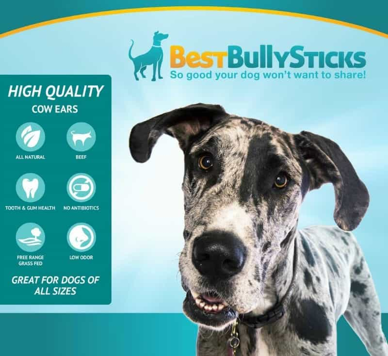win best bully sticks cow ear dog chews or 15 amazon gc thankfulpawshop. Black Bedroom Furniture Sets. Home Design Ideas