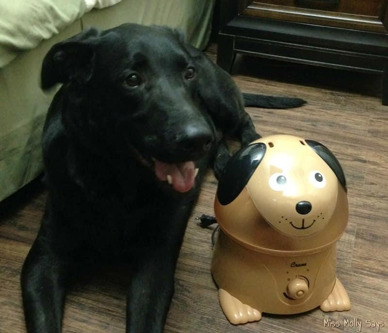 Crane Cool Mist Humidifier with German Shepherd Lab Mix dog