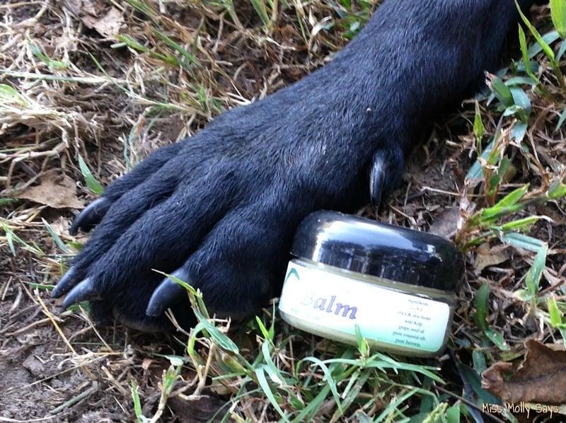 Kelp Balm with German Shepherd Lab Mix paw