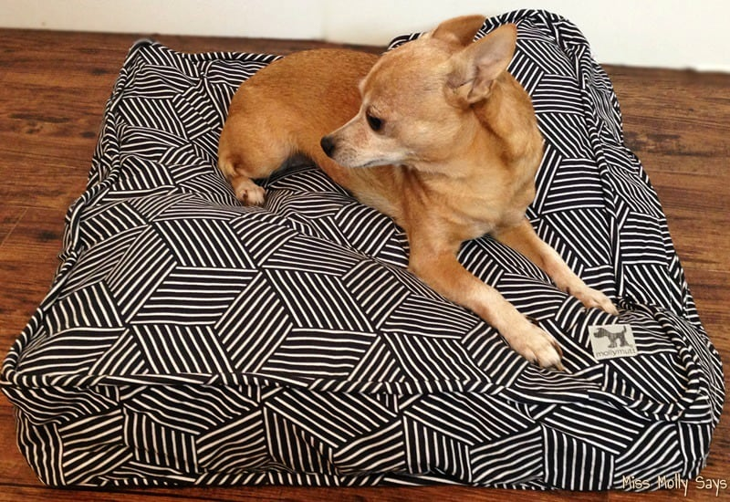 Molly Mutt Dog Bed in Rough Gem pattern with tan Chihuahua