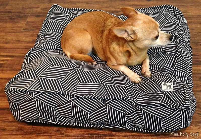 Dogs Love the Eco-Friendly Molly Mutt Dog Bed!