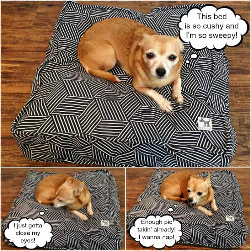 Molly Mutt Dog Bed in Rough Gem pattern with tan Chihuahua comic