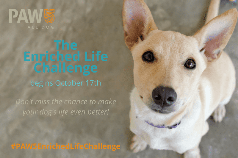 Join us for a Week of Dog Enrichment Activities in the #PAW5EnrichedLifeChallenge!