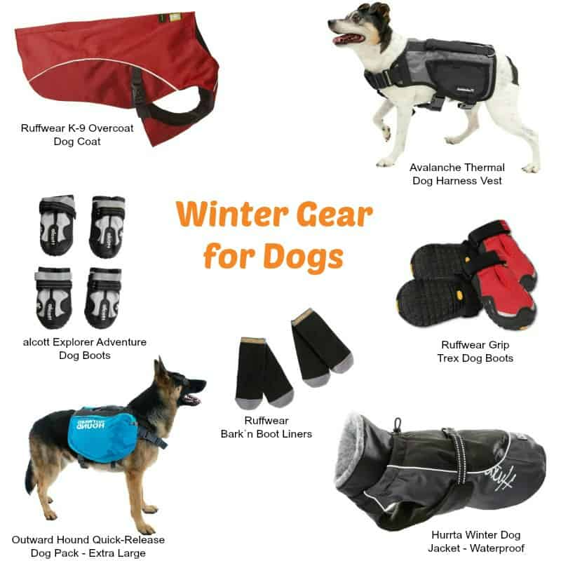 Preparing for Winter Hiking with Sierra Trading Post - Winter Essentials for Dogs