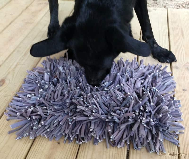 PAW5 Wooly Snuffle Mat Puzzle Feeder with black German Shepherd Lab Mix
