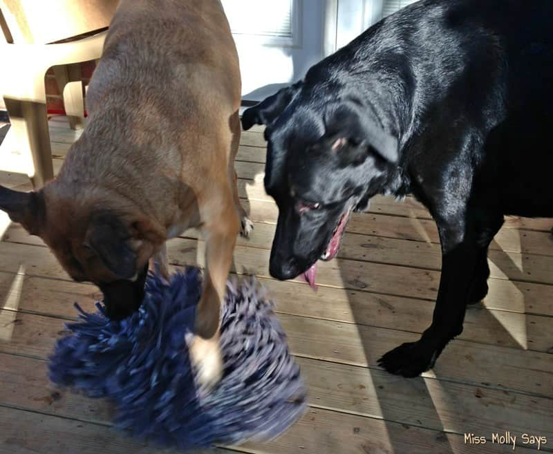 wooly-snuffle-mat-with-german-shepherd-lab-mixes-3