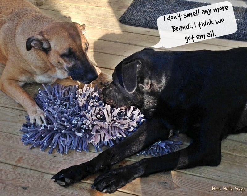 wooly-snuffle-mat-with-german-shepherd-lab-mixes-i-dont-smell-any-more