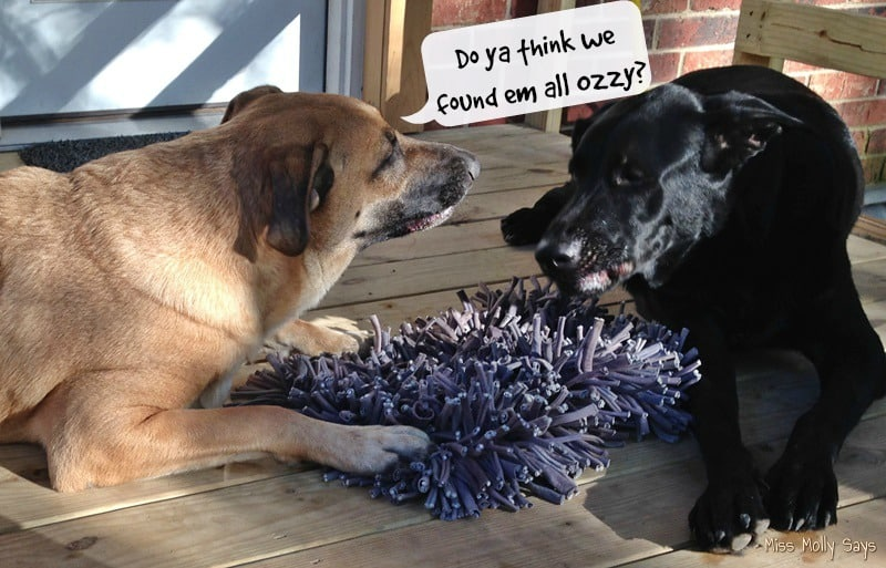 wooly-snuffle-mat-with-german-shepherd-lab-mixes-do-ya-think-we-found-em-all