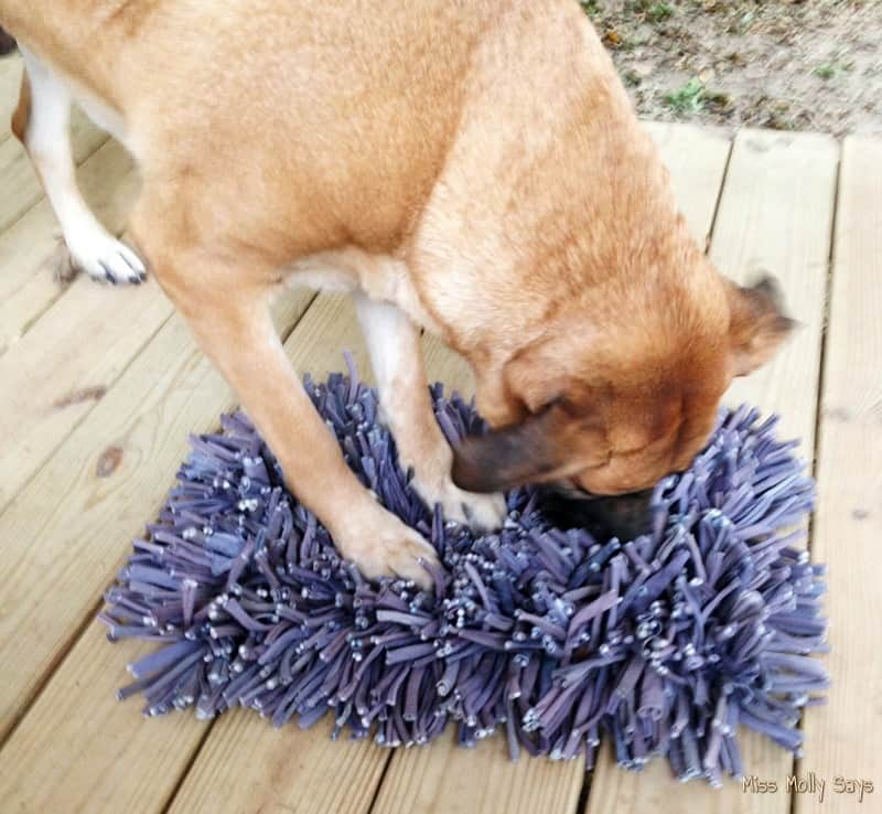 PAW5 Wooly Snuffle Mat Puzzle Feeder with tan German Shepherd Lab Mix