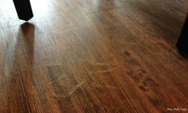 dog hair on floor in sunlight