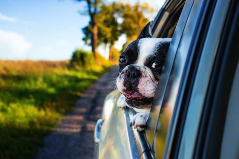 8 Tips for Pet Proofing Your Car