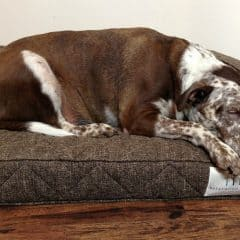 Brentwood Home Runyon Pet Bed Oozes Quality, Comfort, & Beauty!