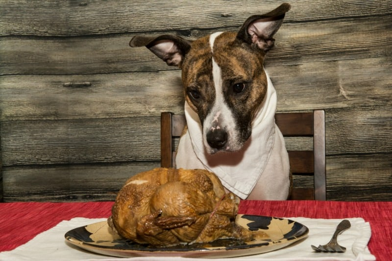 How to Keep Your Pets Safe this Thanksgiving