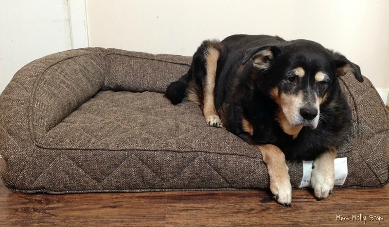 Rottweiler Mix Laying on a Brentwood Home Runyon Pet Bed