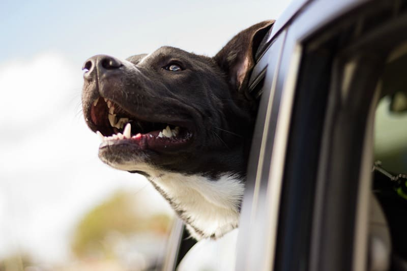 Top 7 Things to Keep in Mind Before Going on a Road Trip with Your Dog