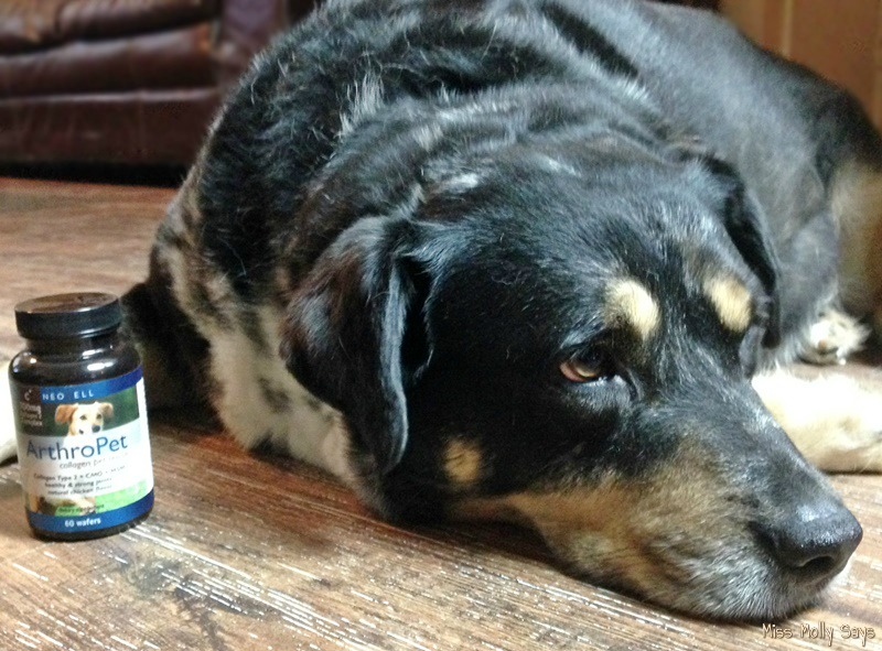 NeoCell ArthroPet Collagen Supplements Joint Support with Australian Shepherd