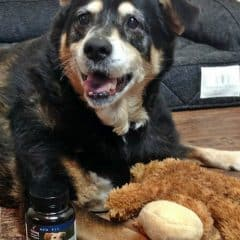 ArthroPet Collagen Supplements: Helping Pets with Joint Mobility and Comfort