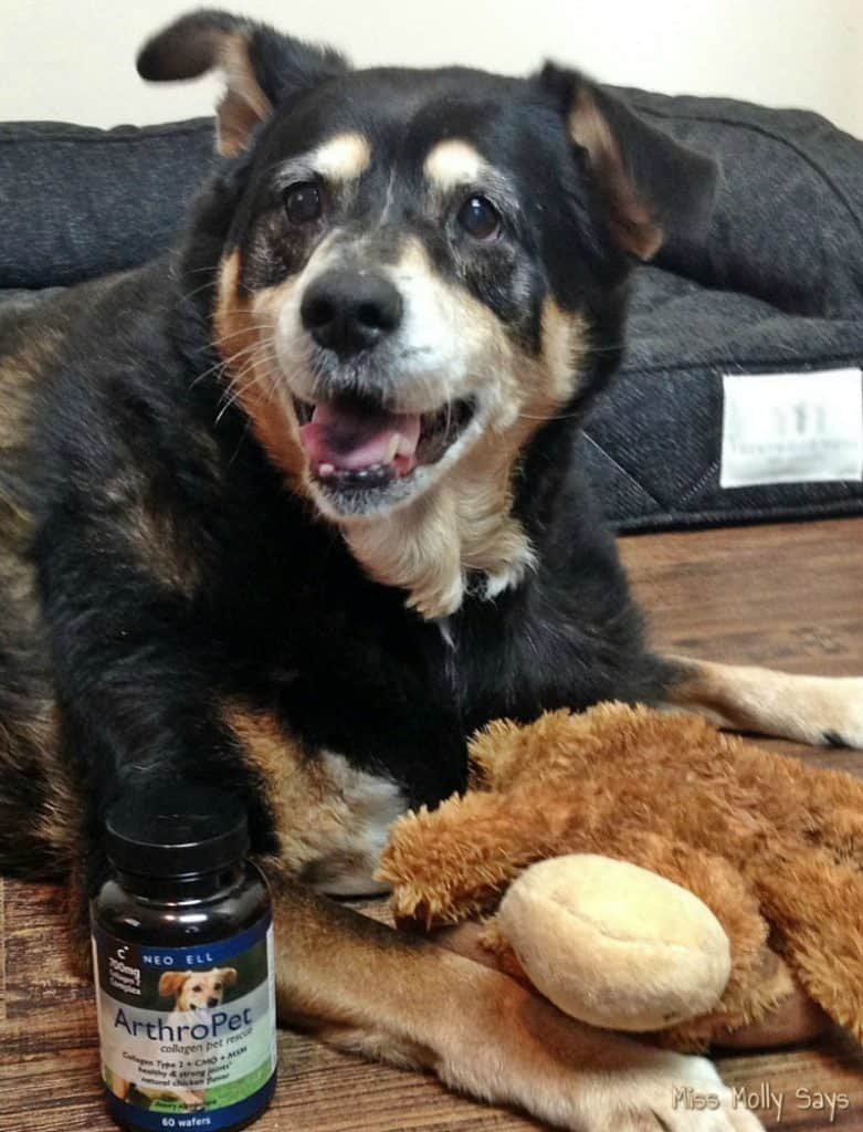NeoCell ArthroPet Joint Support with senior rottweiler mix