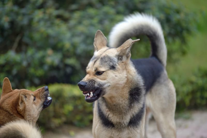 How to Avoid Dog Fights When You Go For A Walk