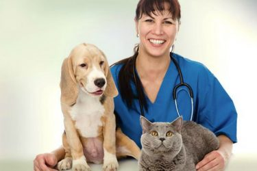 Your Furry Children: How Technology Plays a Role in Veterinary Care