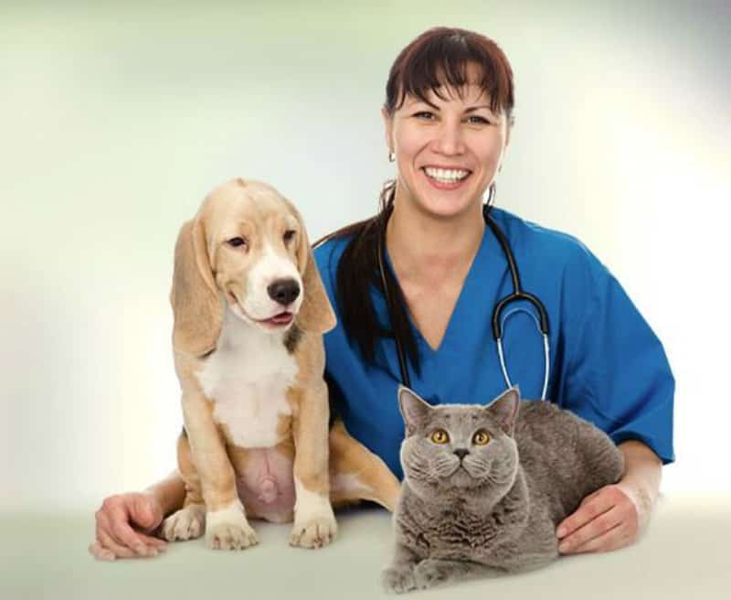 Your Furry Children How Technology Plays a Role in Veterinary Care