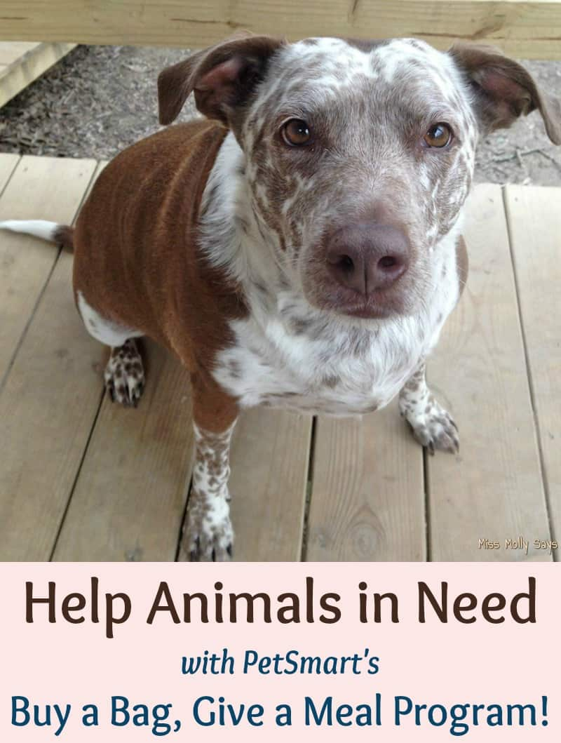Help Animals in Need with Buy a Bag, Give a Meal Program #fortheloveofpets