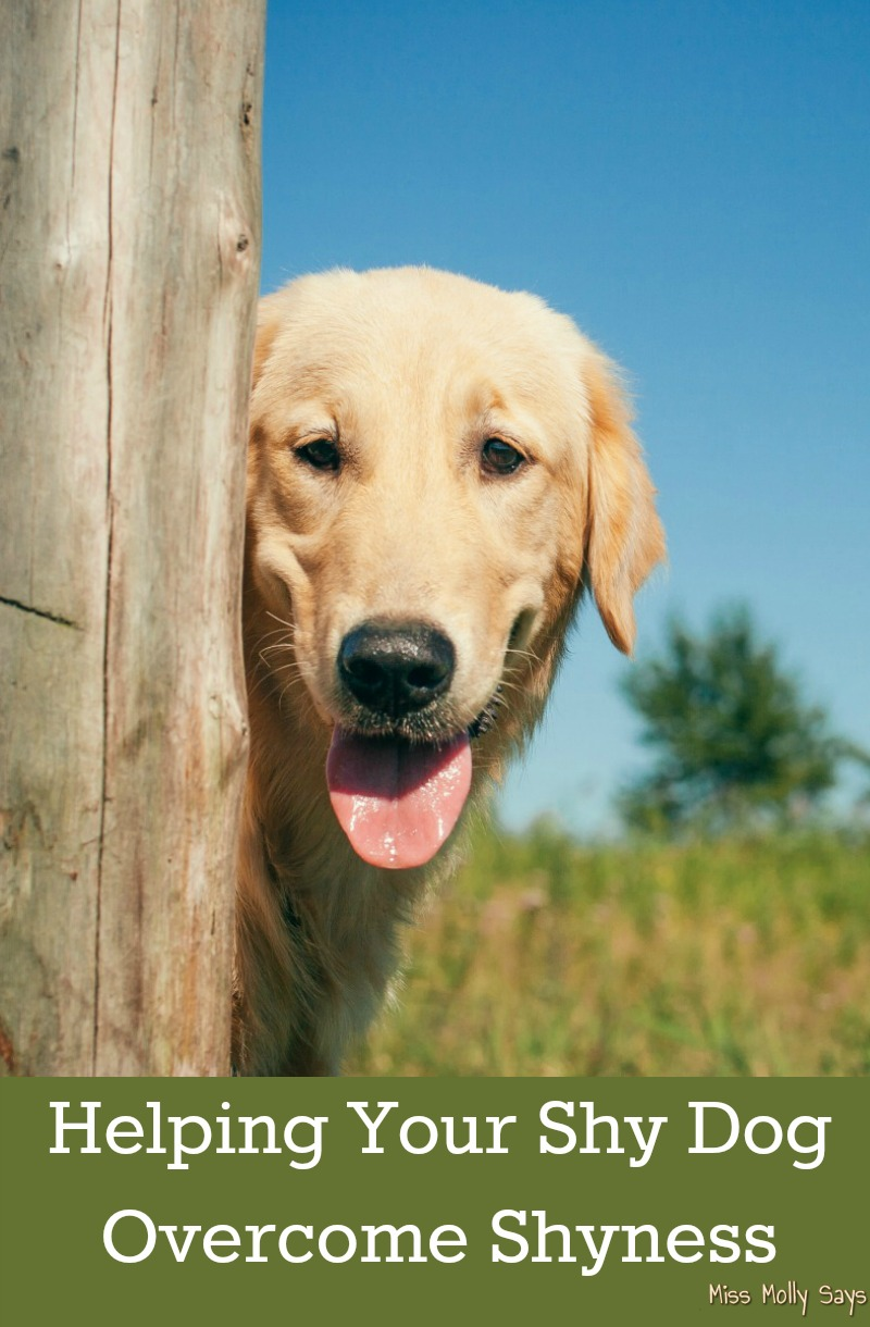 Helping Your Shy Dog Overcome Shyness