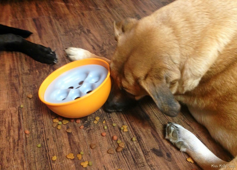 Fun Summer Activities for Dogs - puzzle feeders