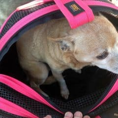 Sleepypod Mobile Pet Bed: A Stylish Pet Carrier, Bed, & Car Seat All-In-One #Petpalooza2