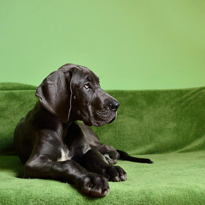 5 Simple Ways to Make Your Home Dog-Friendly