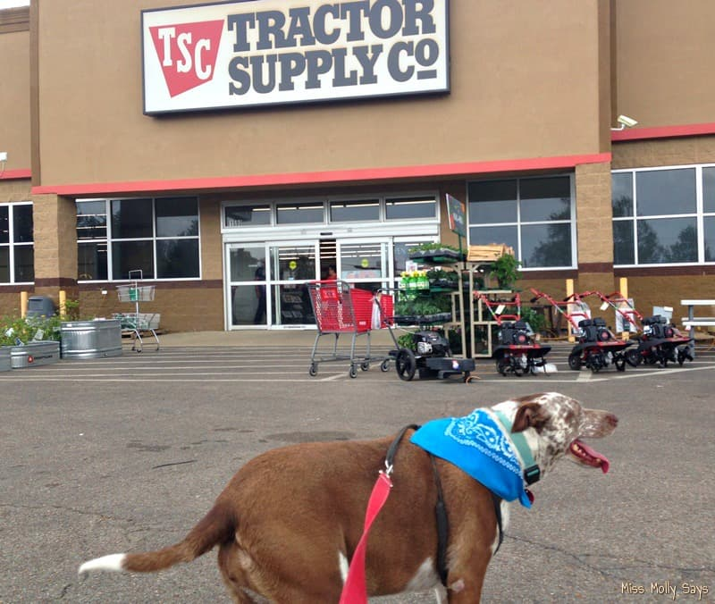 Miss Molly Shops for the New Expanded Offering of Purina Pet Products at #TractorSupply