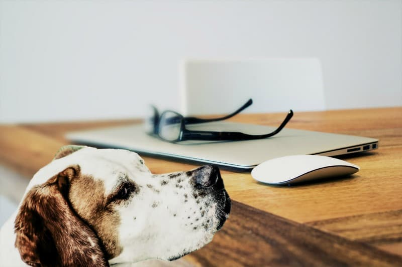4 Tips For Making Your Home More Pet Friendly