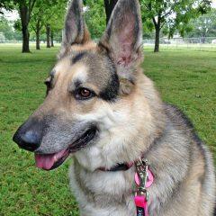 Nifti SafeLatch Leashes Helps Keep Your Dog Safe! #Petpalooza2