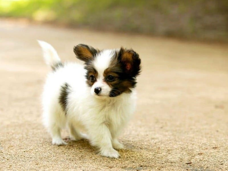 4 Useful Pet Care Tips for People Who've Never Owned a Small Dog